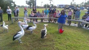 Feeding Pelicans Kalbarri, best things to do with kids Kalbarri & WA Midwest, Kalbarri Family Travel, Kalbarri with Kids