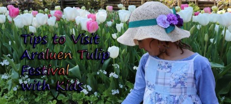 tips-to-visit-araluen-tulip-festival-with-kids2